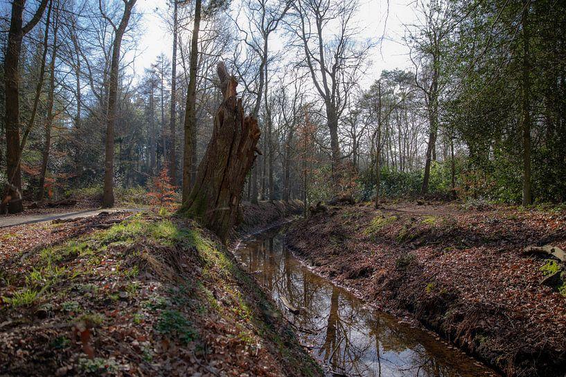 Ruisseau dans la forêt près d'Eelde-Paterswolde sur Sander de Jong