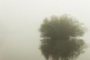 Eenzame boom in de mist