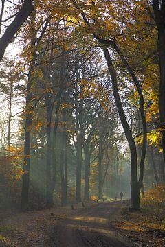 Herfst in de Sweachster Bosken von Wilco Berga