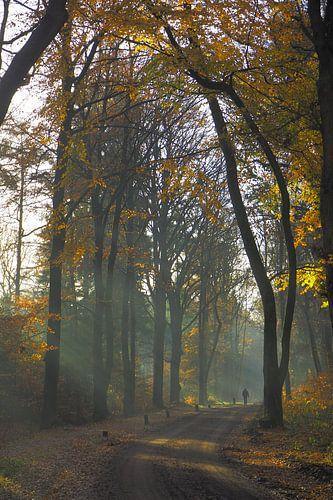 Herfst in de Sweachster Bosken van