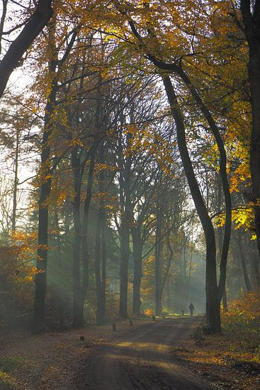 Herfst in de Sweachster Bosken van Wilco Berga