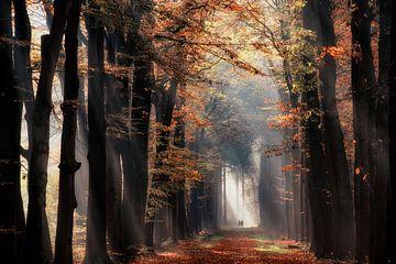 Scheinwerferlicht im Wald, Velhorst Estate von Lars van de Goor