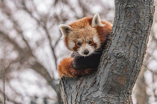 Rode panda van Jessica Blokland van Diën