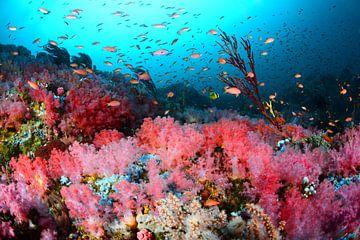 Roze koraaltuin van Filip Staes