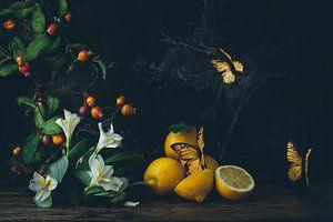 Stilleben mit Zitrusfrüchten und Schmetterlingen