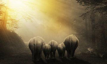 Unterwegs mit den Elefanten von Bert Hooijer
