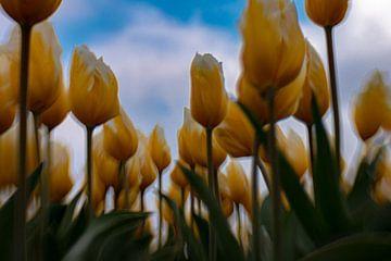 Unter dem holländischen blauen Himmel von Capturedlight.nl Annet & Michel