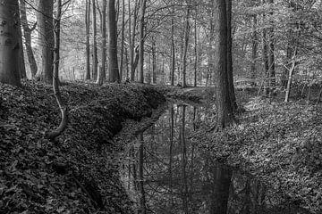 Kronkelende beek tijdens de nazomer (zwart/wit) van Eelke Brandsma