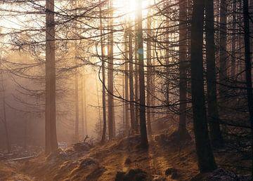 Sonnenuntergang in nebligem Wald von Anam Nàdar
