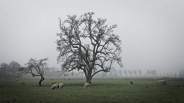 Mistige boom met schapen van Mark Veldman