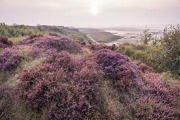 Paysage de lande à Morsum Cliff, Sylt sur Christian Müringer