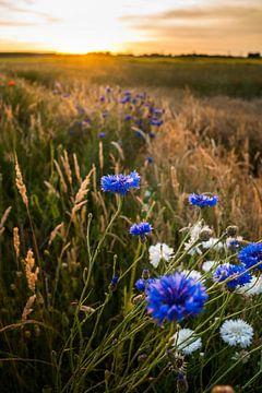 Strahlende Feldblumen in der Abendsonne von Fotografiecor .nl