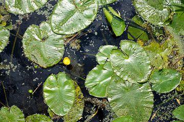 Wasserlilie von Sjoerd van der Hucht