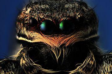 Springspin - Salticidae van Rob Smit