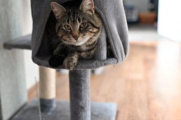 Grijs gestreepte kat liggend in een krabpaal van JGL Market