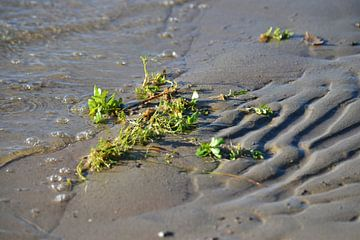 Aangespoelde waterplant von Annemarie Goudswaard