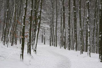 Sprookjesbos in de winter met sneeuw van Maarten Pietersma