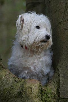 Rumänischer Hund von Patrick vdf. van der Heijden
