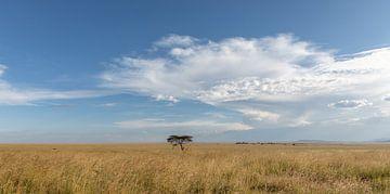 Landschap Tanzania van Gonda van Wijk