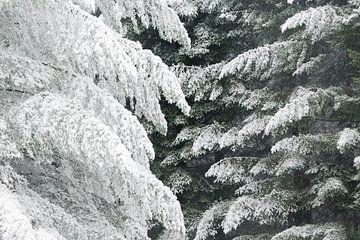 Een winters tafereel. Dwingelderveld, Drenthe. sur Ton Drijfhamer
