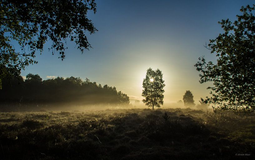 Lighting tree van Jeroen Maas
