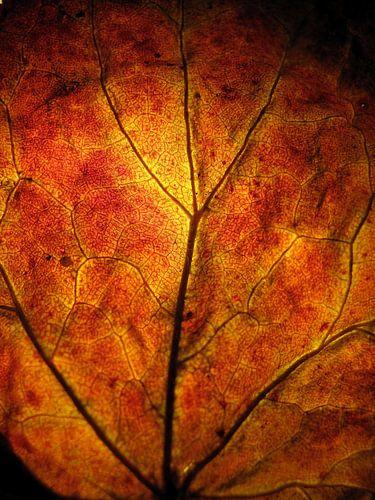 Vurige herfst van