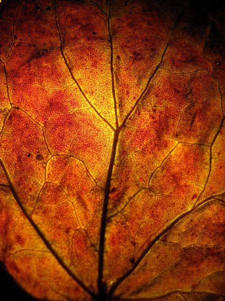 Vurige herfst van Vectorific Design