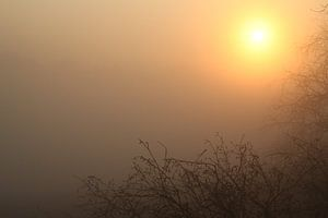 Zonsopkomst door de mist op een vroege lenteochtend