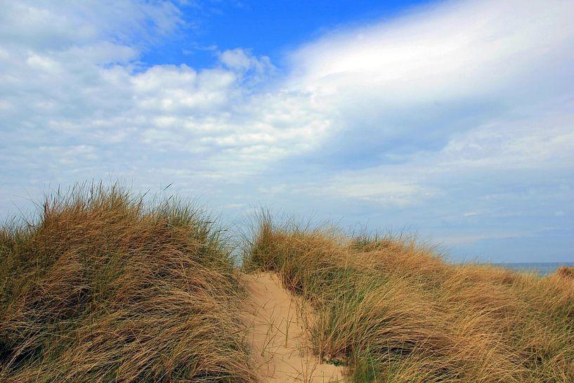 Dünenweg van Ostsee Bilder