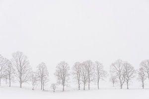 Bomen in een wit landschap in de sneeuw