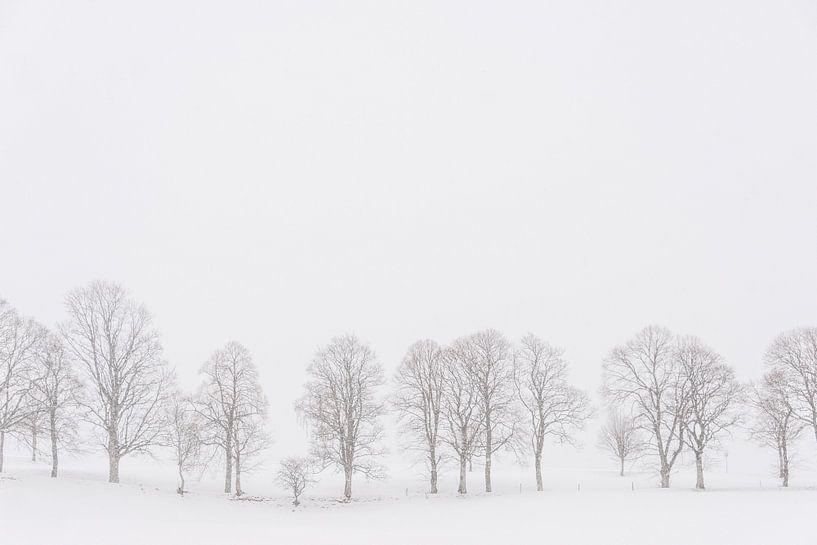 Bomen in een wit landschap in de sneeuw van iPics Photography
