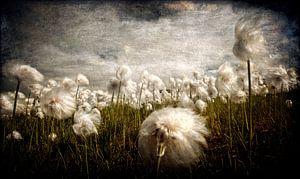 Fluffies van Ruud van den Berg