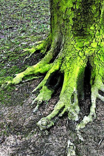 Roots van Sigrid Klop