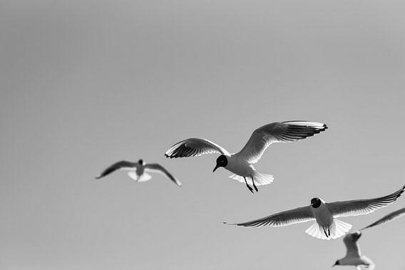 Meeuwen in de lucht in zwart wit van Leon Doorn