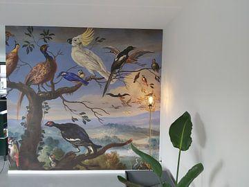 Kundenfoto: Exotische Vögel Brafa, Jan van Kessel