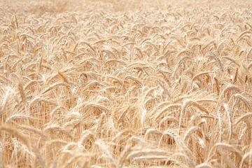 Weizenfeld von Els Broers