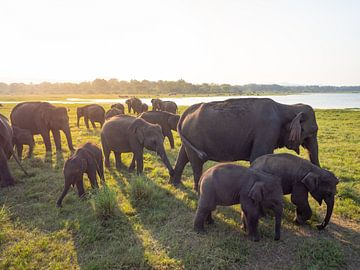 Groep olifanten tijdens zonsondergang in Kaudulla National Park, nabij Sigiriya | Reisfotografie Sri van Teun Janssen