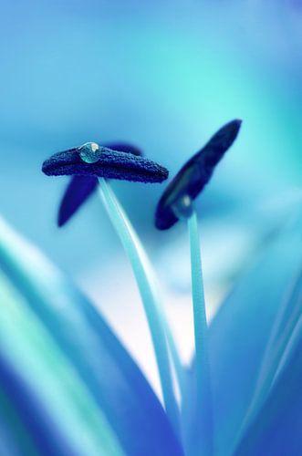 blue van Violetta Honkisz