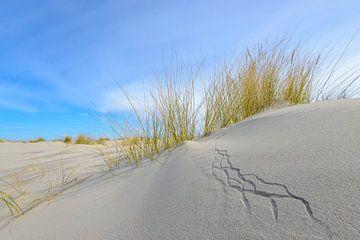 Dune d'herbe poussant sur de petites dunes de sable sur la plage de Schiermonnikoog sur Sjoerd van der Wal
