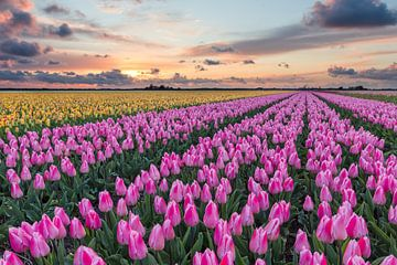 Frühlingslandschaft mit Sonnenuntergang von eric van der eijk