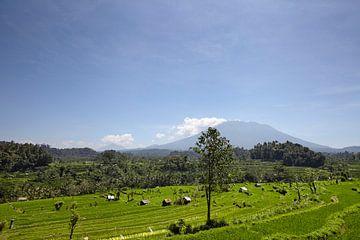 Eine traditionelle Reisterrasse im wunderschönen Sidemen-Tal in Ostbali, Indonesien von Tjeerd Kruse