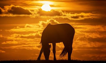 Silhouet van een paard tijdens zonsondergang van