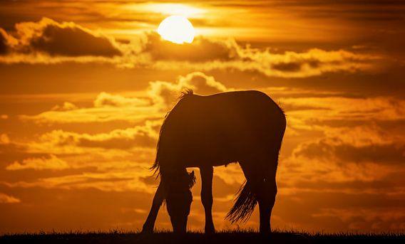 Silhouet van een paard tijdens zonsondergang van Martijn van Dellen