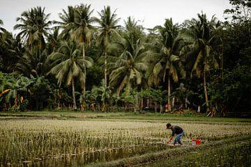 Mann bei der Arbeit auf den Reisfeldern auf den Philippinen von Yvette Baur