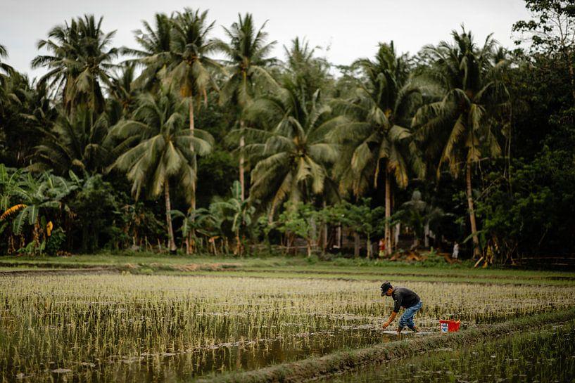 Man aan het werk op rijstveld in de Filipijnen van Yvette Baur