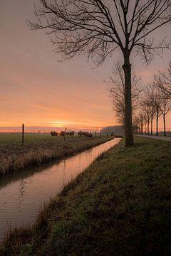Schapen bij zonsopkomst van Moetwil en van Dijk - Fotografie