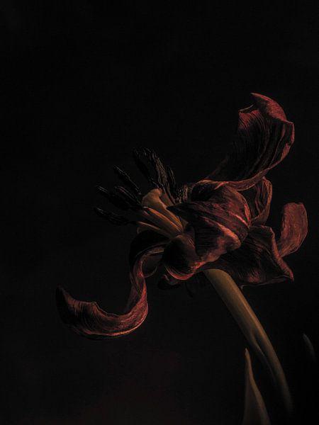 Tulp uitgebloeid van bird bee flower and tree