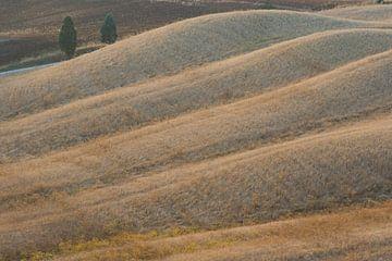Lijnenspel in Toscane. van Rens Kromhout