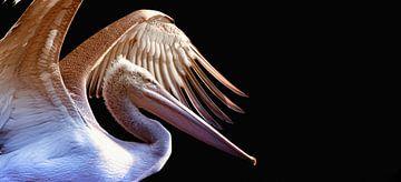 Pelikan (1) von Rob Wareman Fotografie