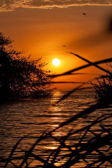 Sunset Victoriameer